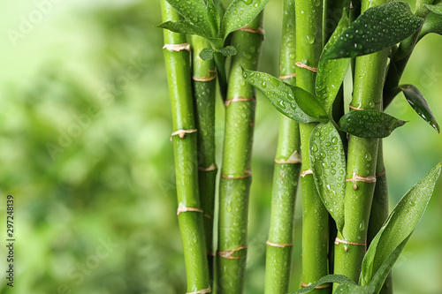 Beautiful green bamboo stems on blurred background Wallpaper Mural