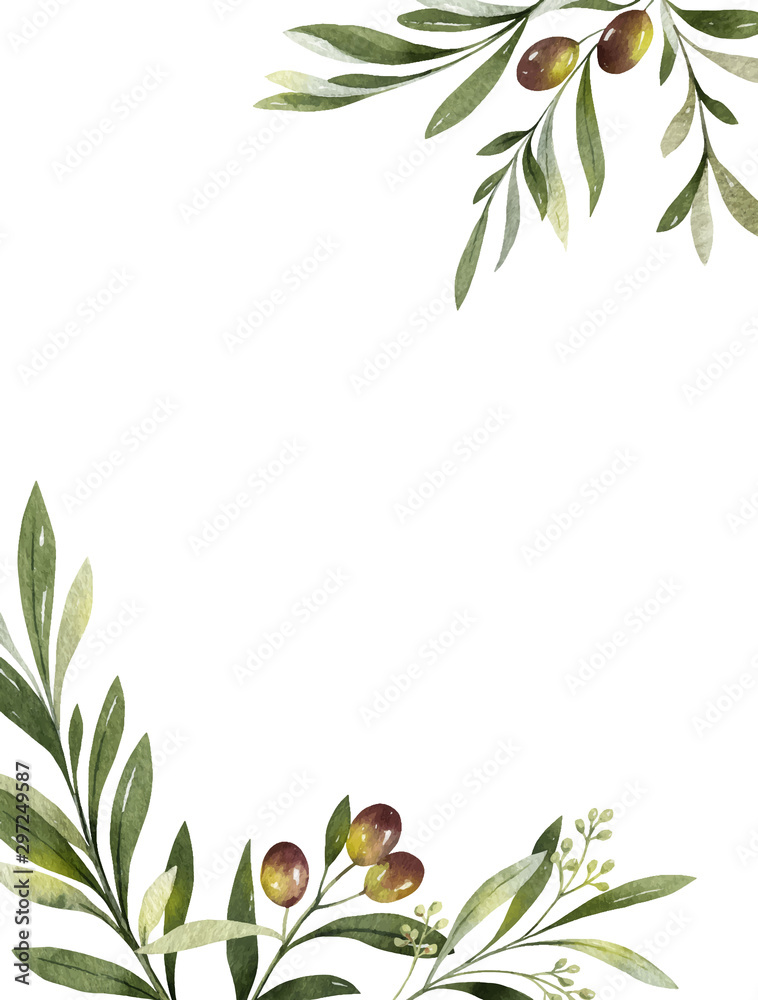 Fototapety, obrazy: Watercolor vector card of olive branches and leaves.