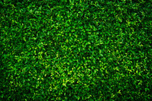 Small Green Leaves Texture Bac...