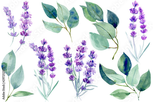 Fototapeta lavender flowers and blue leaves  eucalyptus on an isolated white background, clipart watercolor painting, hand drawing obraz