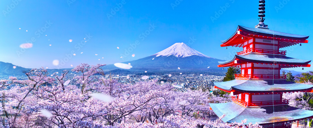 Fototapeta 桜吹雪舞う新倉山浅間公園内の五重塔と富士山