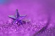 Christmas background.Violet star close-up on a lilac glitter background on a blurry purple background.