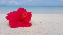 Red Flower In Caribbean Seashore