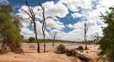 Fototapeta Sawanna - Bald trees on the bank of a river