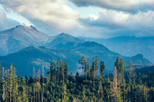 las-pod-gorskimi-szczytami-w