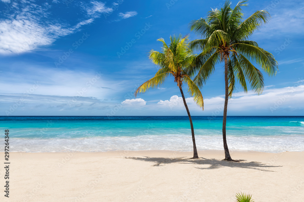 Fototapeta Tropical white sand beach with coco palms and the turquoise sea on Caribbean island.