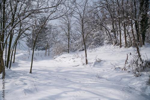 Photo paesaggio con neve fresca e alberi