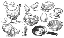 Chicken Set Sketch