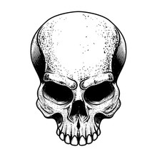 Skull Illustration Isolated On...