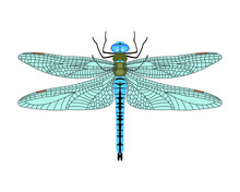 Vector Dragonfly Icon In Flat Style Isolated On White Background.