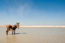 Donkey, South Africa, Desert, Standing In Water