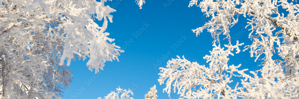 Fototapety, obrazy: Snowy trees from below agoinst blue sky, winter panoramic background with copy-space
