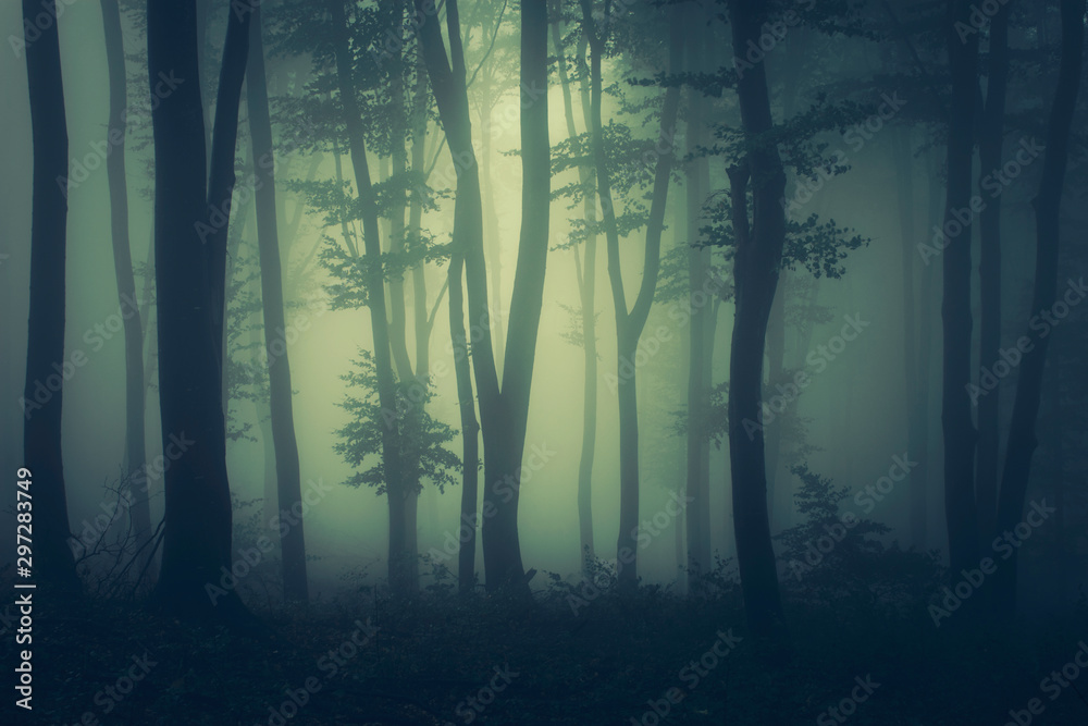 Fototapeta mysterious dark woods fantasy landscape