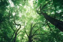 Lush Forest Canopy, Natural Gr...