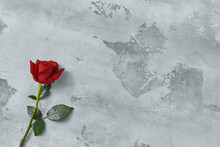 Red Roses Lie On A Textured Light Background. Space For Your Text