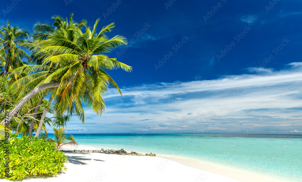 Fototapety, obrazy: tropical paradise beach with white sand and coconut palm trees