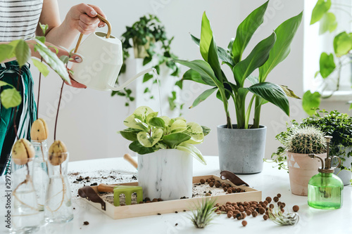 Fototapeta Woman gardeners watering plant in marble ceramic pots on the white wooden table