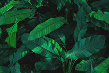 Green Leaves Nature Background, Closeup Tropical Leaves Texture