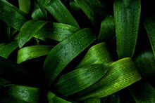 Abstract Green Texture, Nature...