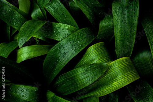 abstract green texture, nature blue tone background, tropical leaf