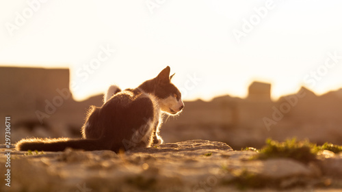 A cat with just one eye in the dawn. Fototapet