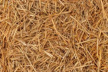 Yellow Dry Hay Straw Backdrop Texture. Dry Cereal Plants, Farm Rural Agricultural.
