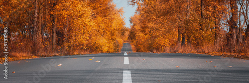 Foto op Aluminium Herfst Banner3:1. Empty asphalt road in autumn forest. Autumnal background