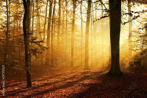Keuken foto achterwand Honing Autumn morning in old forest
