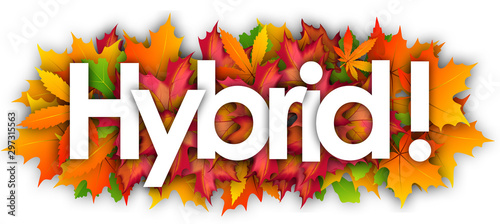 Hybrid word and autumn leaves background Fototapete