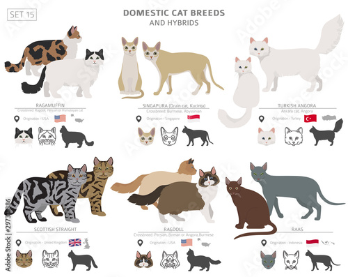 Valokuva Domestic cat breeds and hybrids collection isolated on white