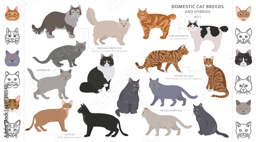 Obraz Domestic cat breeds and hybrids collection isolated on white. Flat style set. Different color and country of origin - fototapety do salonu