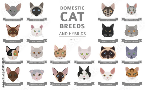 Domestic cat breeds and hybrids portraits collection isolated on white Fototapete