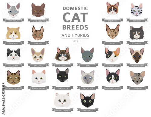 Valokuvatapetti Domestic cat breeds and hybrids portraits collection isolated on white