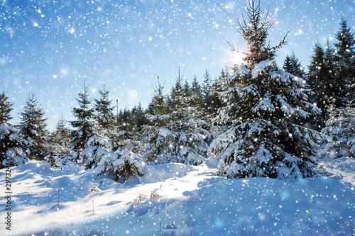 Fotografía Snowfall in a german winter forest .Winter background.