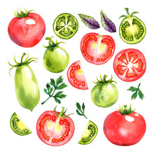Watercolor Vegetables Set With Red And Green Tomatoes, Basil And Parsley