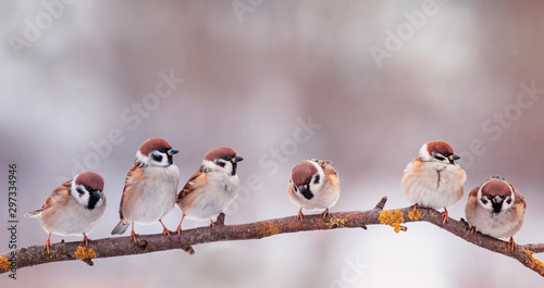 Recess Fitting Bird holiday card with many little funny birds sparrows sitting in Sunny garden on a branch in the spring