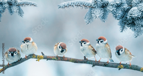 Christmas card with lots of cute little birds, the sparrows sitting in the wint Canvas Print
