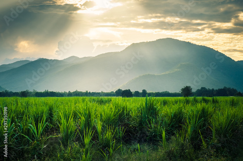 Canvastavla Mountain in sunlight  and sugarcane fild