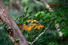 Orange Leaves Contrasting Yell...