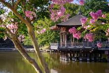 A Lake At Nara Park, Japan