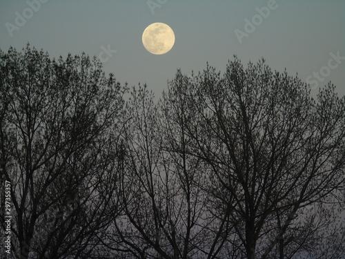 Fotografiet luna llena en el bosque
