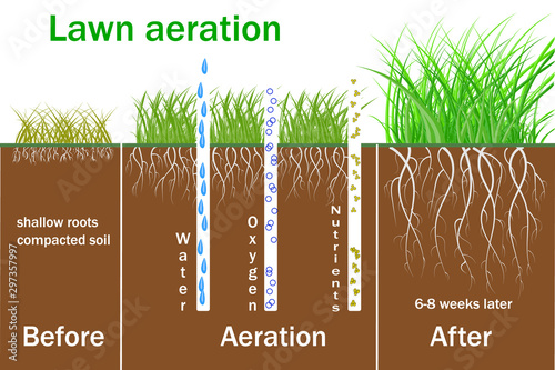 Fotografija Lawn aeration for active plant growth