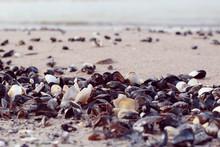 Empty Sea Shells On The Beach ...