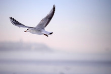 Wildlife Photo Of A Seagull In...