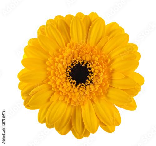 Foto op Canvas Gerbera Yellow gerbera flower