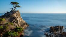 Pebble Beach Lone Cypress Tree