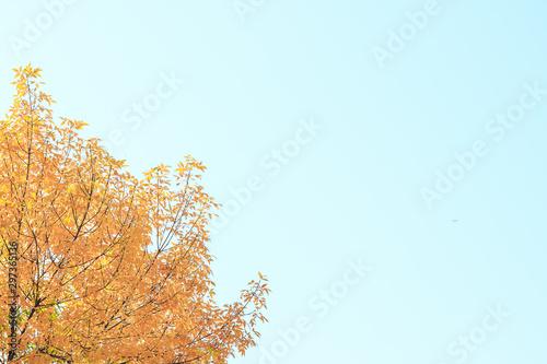 Keuken foto achterwand Lichtblauw Background texture of yellow leaves.