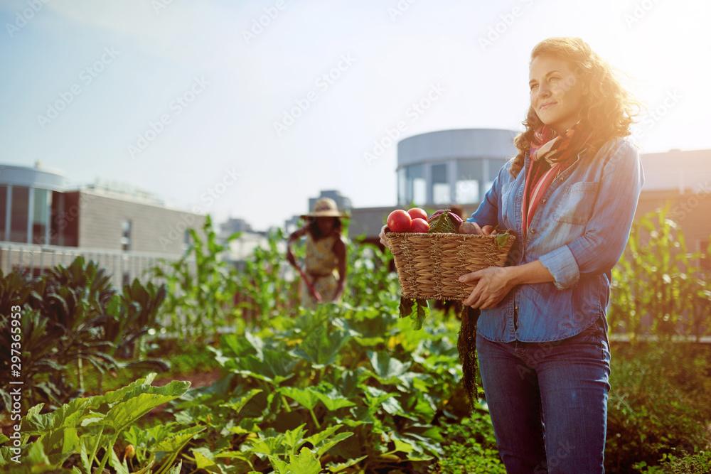Fototapeta Friendly woman harvesting fresh vegetables from the rooftop gree