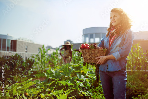Fototapeta Friendly woman harvesting fresh vegetables from the rooftop gree obraz