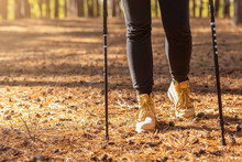 Cropped Image Of Woman Hiking With Trekking Poles In Forest